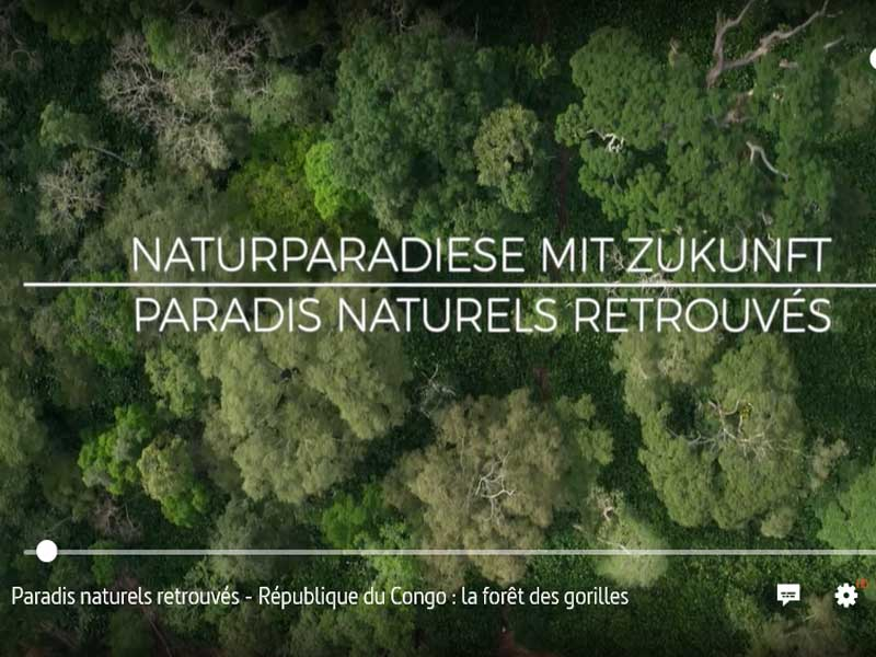 INTERHOLCO Protecting the gorilla forest in the Republic of Congo